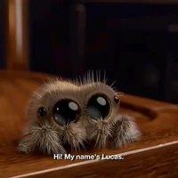 Lucas, la petite araignée