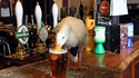 Que fait un canard au bar ?