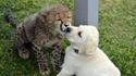Comme chien et chat 38