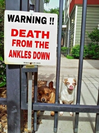 Attention aux chevilles