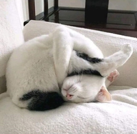 Mylo fait la sieste