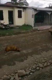 L'histoire de Sprouitch le chien