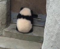 Arrêtoir de porte