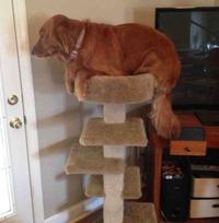 Un chien sur un arbre à chat