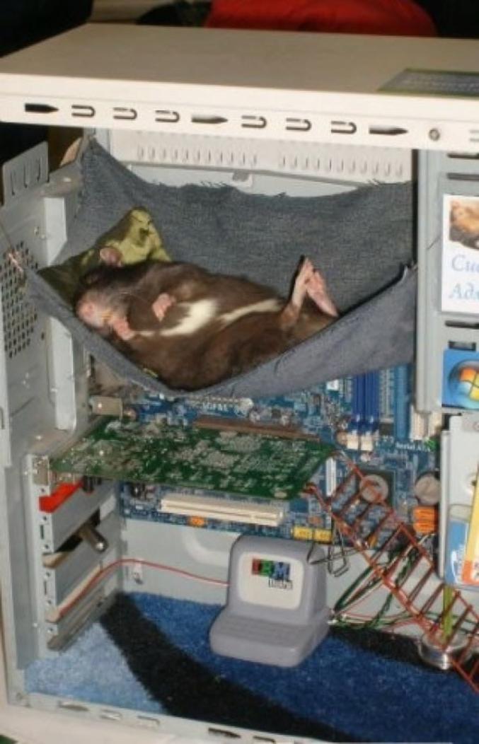 Pour un système de refroidissement efficace, adoptez le hamster !  1 000 tours/minute pendant trois heures, et pas un bruit, ceci est une révolution.