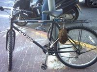 Kan Magnu se lance dans l'apiculture 2