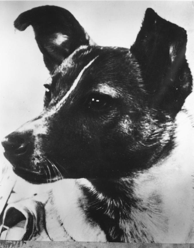Il y a tout juste 60 ans, l'URSS envoyait le tout premier être vivant dans l'espace. La chienne Laïka, âgée de 3 ans, prit place dans la minuscule capsule de Spoutnik II. Elle survécu au lancement mais succomba quelques heures plus tard, probablement du fait de la chaleur excessive, des radiations solaires, du stress... Il n'était pas prévu de la ramener vivante sur Terre. Laïka a ouvert la voie aux vols spatiaux habités. Son portrait figure sur le Monument des Conquérants de l'Espace de Moscou.  Good Girl.