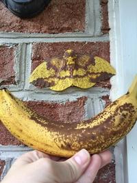"""Après le """"canard banane""""..."""
