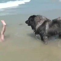 La noyade ?