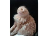 Le chat de Sauron