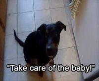Occupe-toi de bébé !