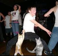 Y'a de la chatte ce soir
