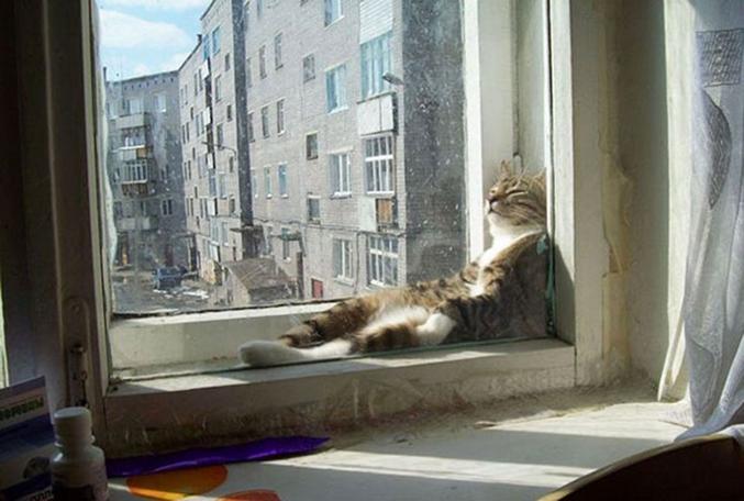 Un chat, une fenêtre, du soleil.