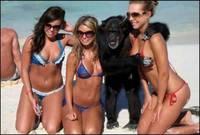 L'homme descend bien du singe