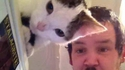 Une oreille de chat sur mesure
