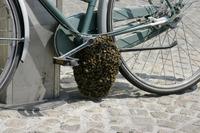 Kan Magnu se lance dans l'apiculture...