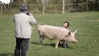 Les vegans pourront remanger de la viande