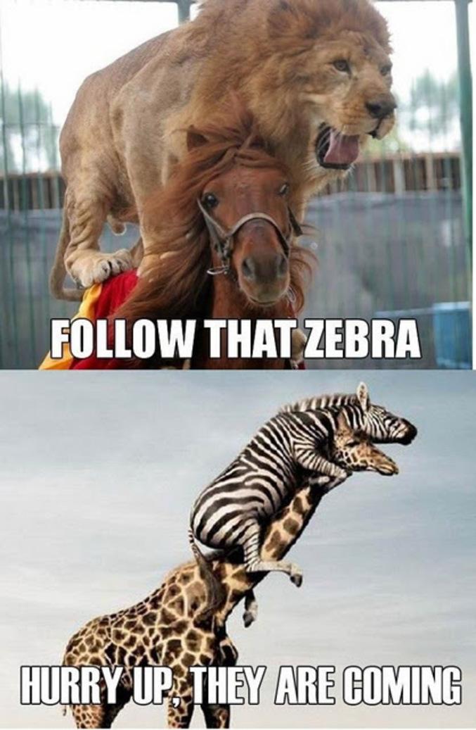 Suivez ce zèbre!