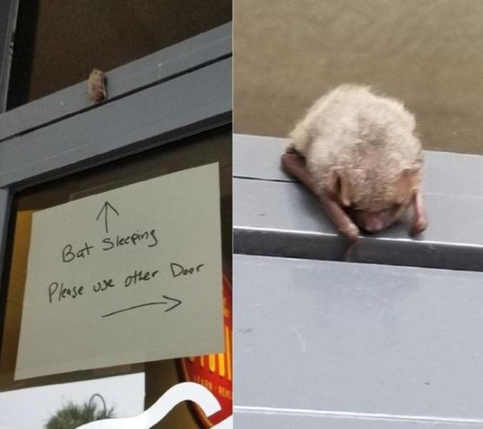 Chauve-souris en train de dormis, svp utilisez une autre porte.