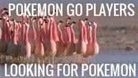 Joueurs de Pokémon GO cherchant un Pokémon rare