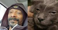 Snoop catty catt