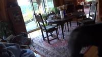 Un asthmatique tombe sur un ours dans sa cuisine