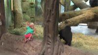 Deux petits primates jouent ensemble