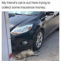 Un chat qui veut faire de l'esbrouffe à l'assurance