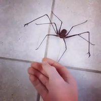 Une mignonne petite araignée