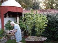Mamie cultive juste ce qu'il lui faut...