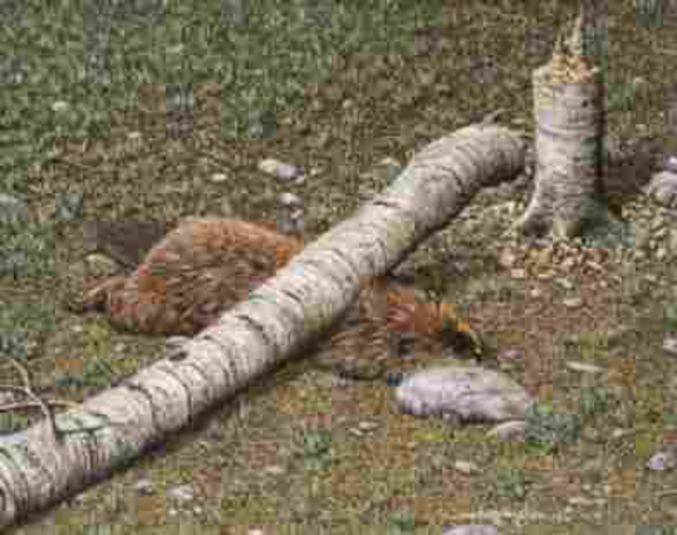pour sauver un arbre mangez un castor