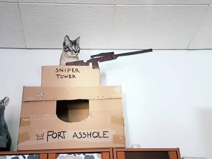 le chat au fort fdp