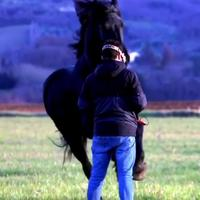 Emmerder un cheval avec un drone de merde