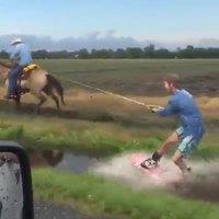 Surfer dans un fossé grâce à un cheval
