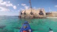 Des requins cherchent à faire basculer un kayak