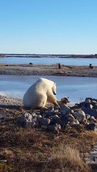 Un ours polaire et un chien