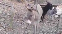 Un âne pas bête