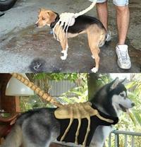 Dog-hugger
