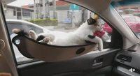 Hamac pour chat en voiture