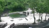 Un bébé éléphant tombe dans un bassin