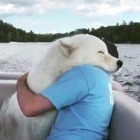 Un ours blanc attaque un homme