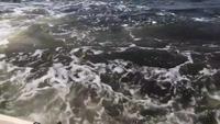 Subitement une baleine à bosse