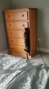 Discretos (le chat)