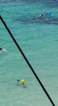 Un requin donne une frayeur à des nageurs