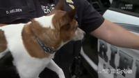 Il fait ses adieux à son chien avant de partir pour la prison
