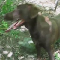 Le chien qui respire le plus rapidement au monde