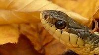 Microphone infra-sonique : le vrai bruit du serpent