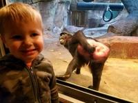 Coucou dit le singe