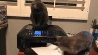 Une raison de plus pourquoi les chats font de mauvaises secrétaires