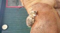 Câlin à un cheval